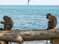 Telangana To Set Up Monkey Rescue, Rehabilitation Centre