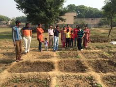 Organic Farming in India: A Success Story