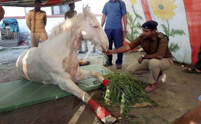 घोड़े 'शक्तिमान' को घायल करने के आरोप में गिरफ्तार भाजपा विधायक को जमानत मिली