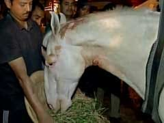 Shaktiman The Horse Was 'Police Officer On Duty', Says Minister Maneka Gandhi