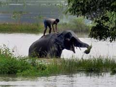 Assam Flood Situation Remains Serious, 1 Dies