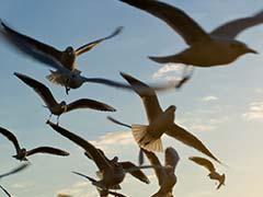 Holes In The Sun Threaten To Throw Birds, GPS Off Course