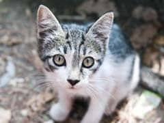 After 5-Year-Old's Letter, British Police Set To Draft Cat Crime Fighters