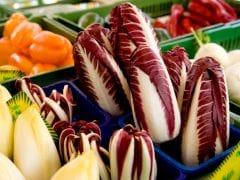 Lettuce's Bitter Rival: Chicories