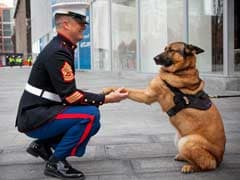 A Medal For Lucca, the Dog Who Sniffed Out Explosives in Afghanistan
