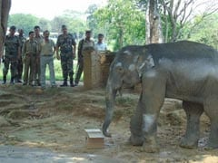 Army Rescues Injured Baby Elephant In Assam