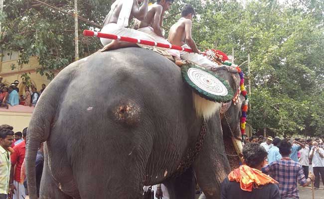 Elephants Keep Up Thrissur Pooram Tradition, Black Paint Masking ...