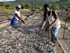 People Around The World Are Eating More Fish: UN Report