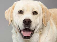 Dog Saves 51-Year-Old Woman From Robber In South Delhi