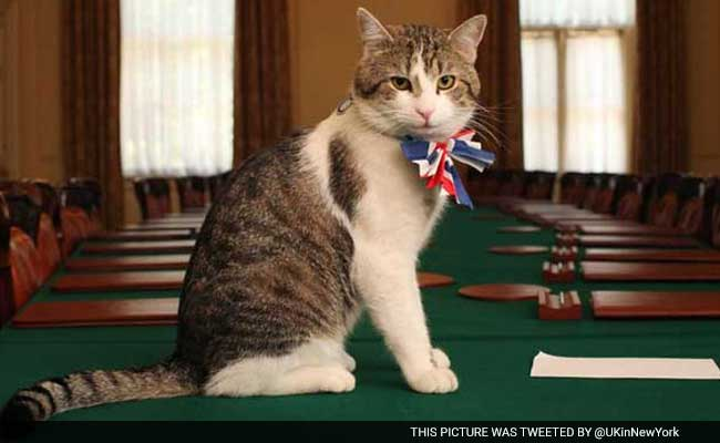 'Chief Mouser' Cat Employed By The UK Foreign Office