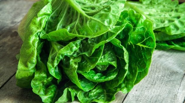 10 Best Lettuce Recipes