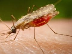 Malaria Drug May Help In Cancer Fight, Early Research Finds