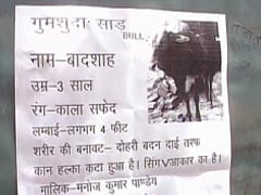 Uttar Pradesh Man Announces Rs. 50,000 Reward For Missing Pet Bull