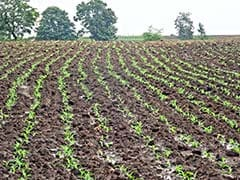 65% of Rs 9.50 Lakh Crore Farm Loans May Be Potentially Waived: Nomura