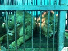 33 VIP Passengers On A Plane Are All Lions Headed Home To South Africa
