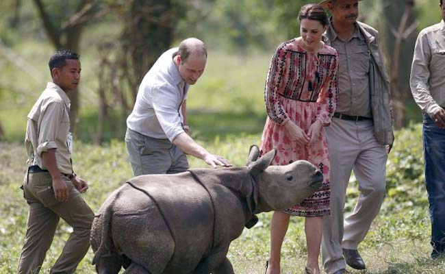 Hours After Royal Couple's Visit To Kaziranga National Park, Another Rhino Killed
