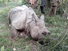 Seventh Rhino Killed In Assam's Kaziranga This Year