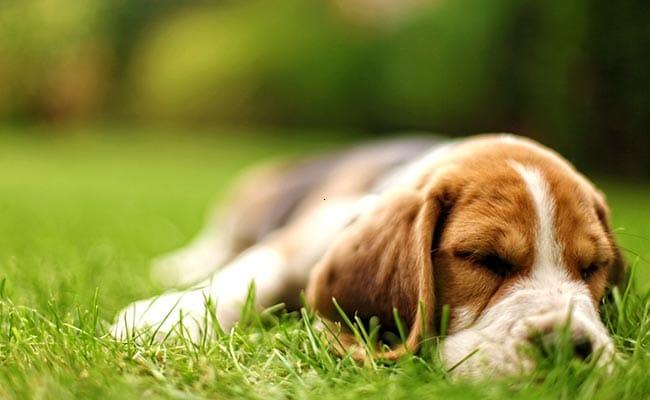 Ever wondered how animals sleep
