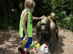 Killing Of Gorilla To Save Boy At Zoo Sparks Outrage