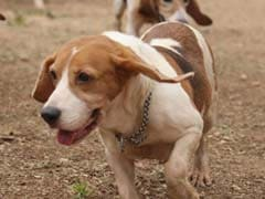 Kerala Civic Body To Make License Mandatory For Pet Dogs