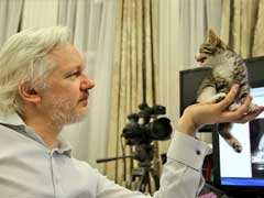 Wikileaks Founder Julian Assange Welcomes This Purry Friend At Ecuador Embassy