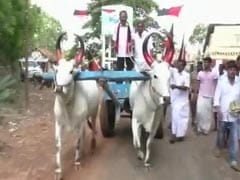 Karunanidhi's Youngest Son Rides A Bullock Cart To Reach Out To Voters