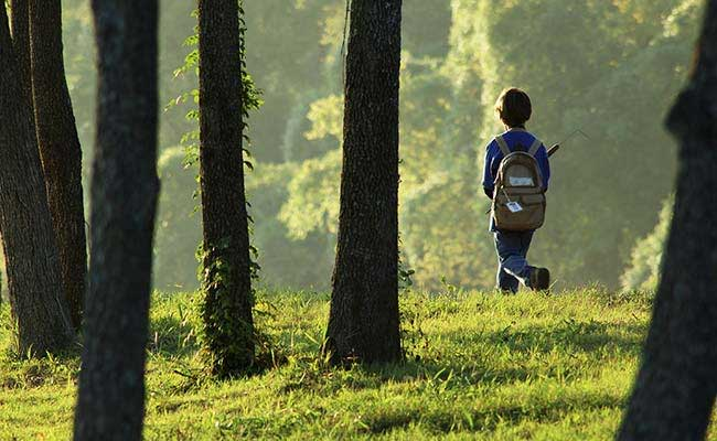 Massive Search For Japanese Boy Left in Forest by Parents As Punishment
