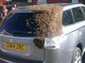 Bees Chase Car For Over 24 Hours To Rescue Their Queen