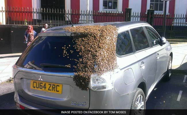 2 Lakh Bees Chase Car For Over 24 Hours To Rescue Their Queen