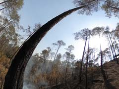 360-Degree View Inside An Uttarakhand Forest, Smoke Still Seen