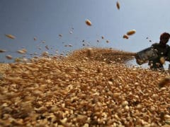 Wheat Imports Hit 5,00,000 Tonnes As Drought Cuts Supplies