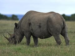 Severe Drought Forces Zimbabwe To Sell Off Wildlife