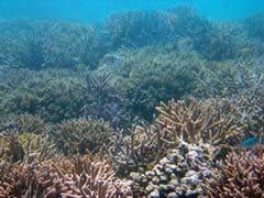 Dozens Of Philippine Fish Species In Danger: Study