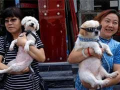 Now, 'One Dog Policy' In This Chinese City