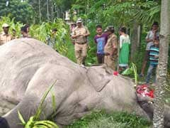 Caught In Electric Fence, Elephant Dies In North Bengal
