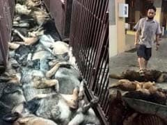 In Kuwait, Controversy Over 24 Dogs Killed Allegedly By US-Owned Firm
