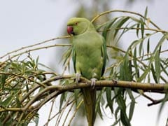 Chatty Parrot Could Help Prosecute Murder Suspect In US