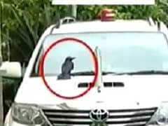 'Crow'-Incidence? Siddaramaiah Changes Car After Bird Sits On It