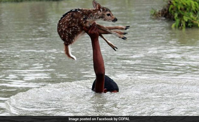 """report flood in bangladesh Bangladesh will be among the most  for example, flood areas could  """"i do not believe the poor are condemned to the future scientists envision in this report."""