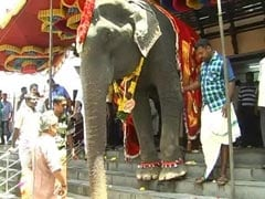 In Kerala, An 86-Year-Old Elephant Caught In The Middle Of Traditions