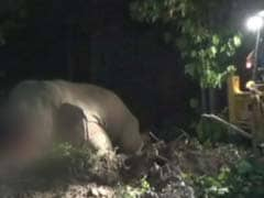 After Search With Drones, Officers Forced To Shoot Dead Elephant