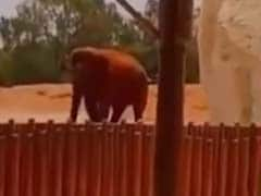 Seven-Year-Old Girl Dies After Elephant Throws Stone In Morocco Zoo