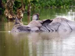 6 Baby Rhinos Saved From Flooded Kaziranga National Park