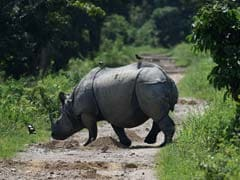 What It Takes To Protect Kaziranga's Rhinos From Determined Poachers