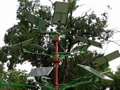 दिल्ली में लगाए गए दिलचस्प पेड़, घरों को मुहैया करेंगे बिजली, जानें कैसे