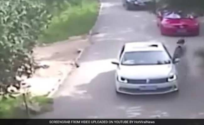 Women Dragged Away By Tigers, 1 Killed As They Left Car After Fight