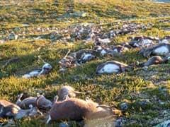 300-reindeer-killed-afp_240x180_41472470915.jpg