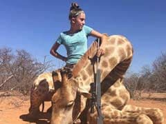 'Despicable': 12-Year-Old Girl Targeted After Posing With Zebra, Giraffe She Hunted And Killed