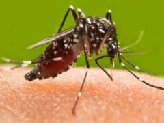 8 Genius Home Remedies for Mosquito Bites That Really Work!