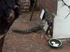 Madhya Pradesh Family Wakes to an Unfriendly Visitor - a Crocodile